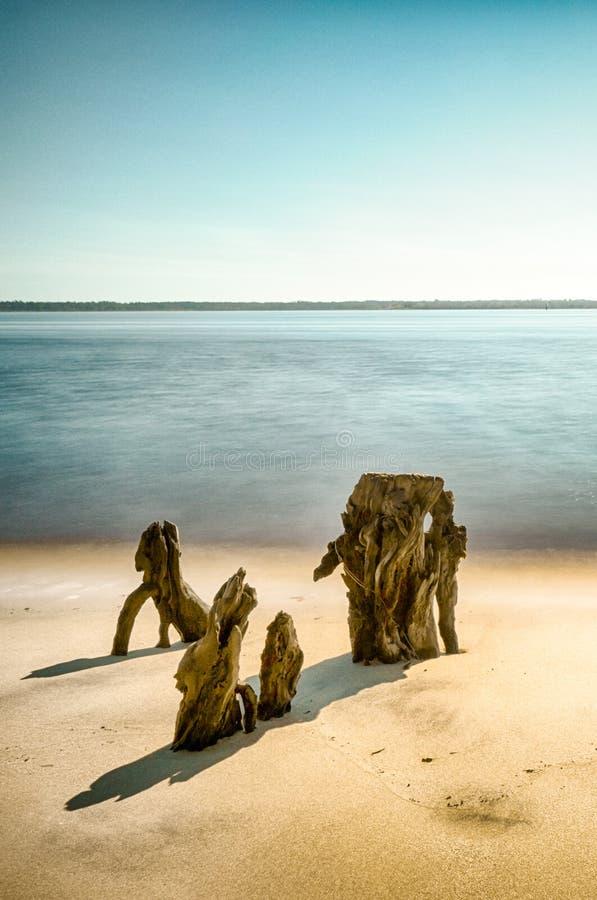 Vista verticale della spiaggia e della vista sul mare costiera con i vecchi ceppi di albero nella sabbia immagine stock libera da diritti