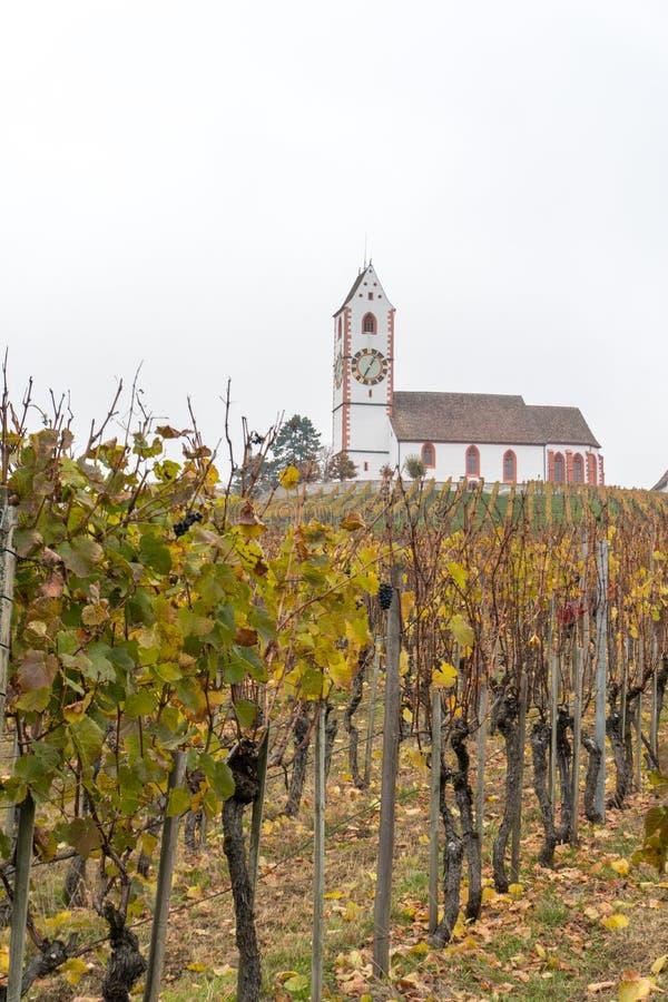Vista verticale di una chiesa bianca pittoresca del paese circondata dal paesaggio dorato della vigna del pinot nero della vigna fotografia stock libera da diritti