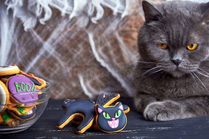 Vista vicina ai dolci casalinghi di Halloween Gatto fotografia stock