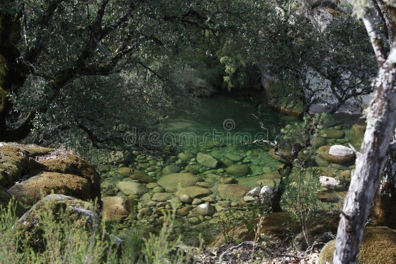 Vistas das árvores nas montanhas, 'Serra de Gredos ', 'La Vera ' imagens de stock