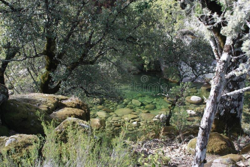 Vistas das árvores nas montanhas, 'Serra de Gredos ', 'La Vera ' fotos de stock royalty free
