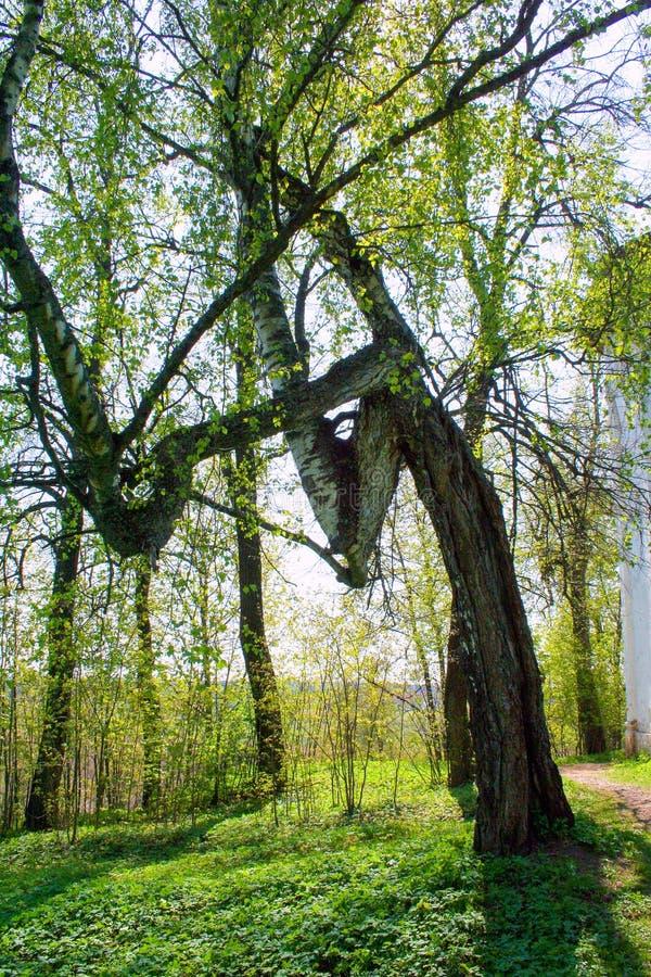 Vistas de la naturaleza en Rusia fotografía de archivo