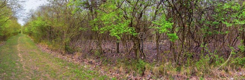 Vistas de la naturaleza y de caminos a lo largo de Shelby Bottoms Greenway y de los rastros naturales del ataque frontal del río  imagenes de archivo