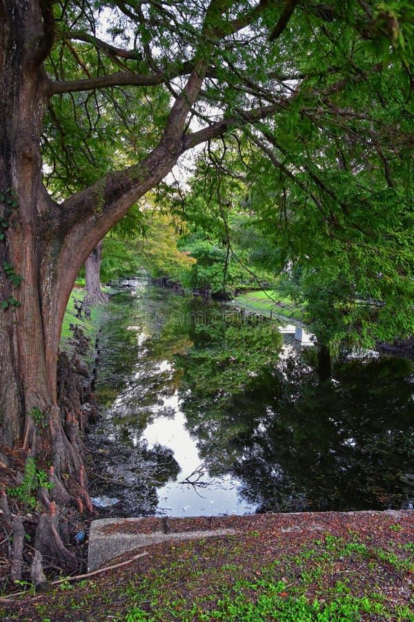 Vistas de los árboles y de los aspectos únicos de la naturaleza que rodean New Orleans, incluyendo piscinas de reflejo en los cem fotos de archivo libres de regalías