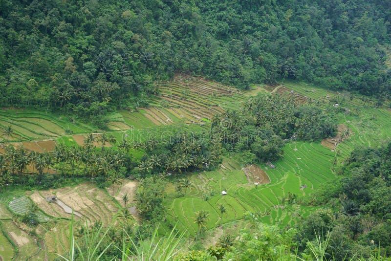 vistas de los campos colgantes del arroz foto de archivo