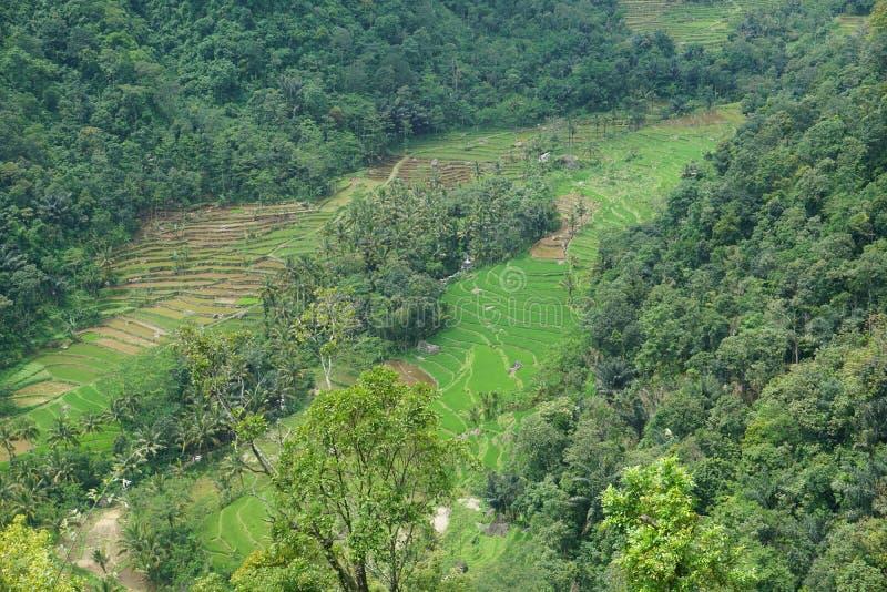vistas de los campos colgantes del arroz imagen de archivo libre de regalías