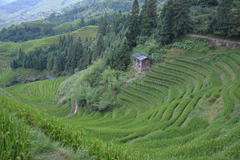Vistas de los campos colgantes verdes, la espina dorsal China del dragón imagenes de archivo