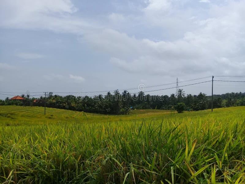 Vistas de los campos del arroz en las áreas tabanan fotografía de archivo libre de regalías