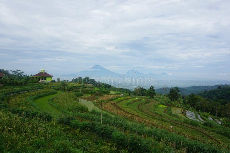 vistas de los campos verdes del arroz en la colina fotos de archivo