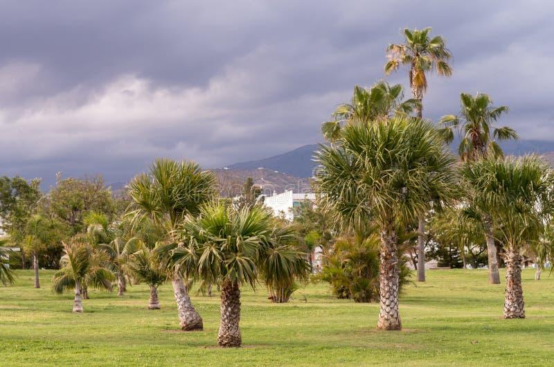 Vistas de um parque com palma e o céu com nuvens de tempestade fotografia de stock