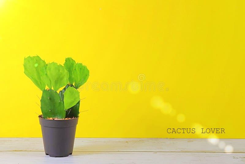 Vistas del CACTUS en fondo en colores pastel amarillo con el texto imagenes de archivo