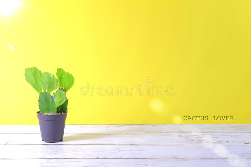 Vistas del CACTUS en fondo en colores pastel amarillo con el texto imagen de archivo libre de regalías