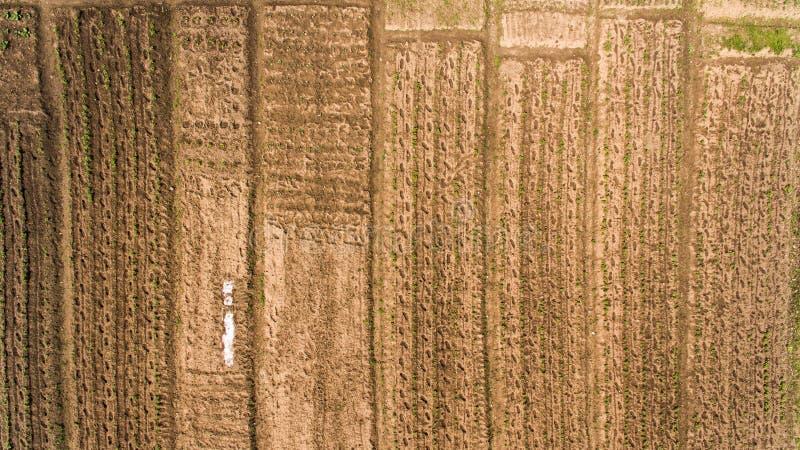 Vistas del jardín de Textura del jardín fotos de archivo