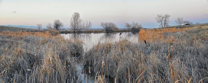 Vistas do trajeto de passeio da lagoa de Josh's, do por do sol refletindo em Broomfield Colorado cercado por Cattails, das plan fotografia de stock royalty free