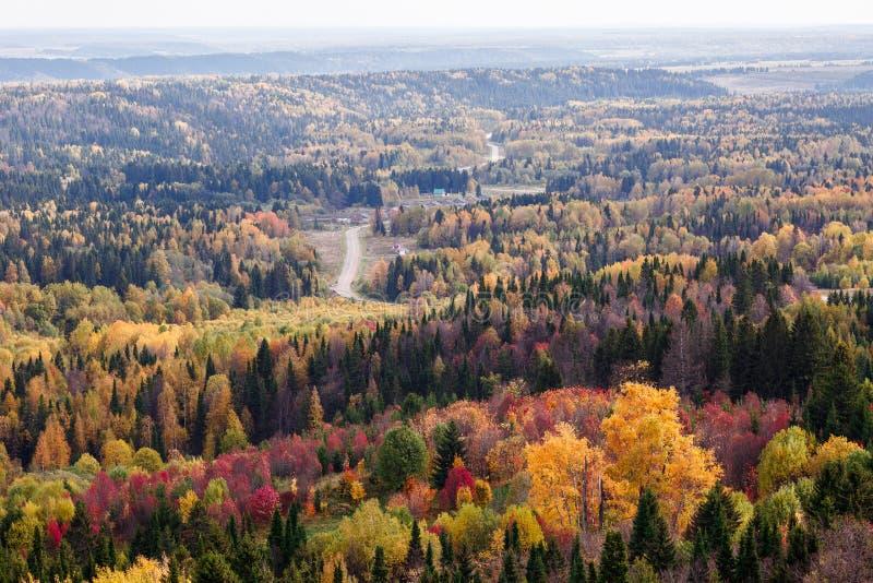 Vistas impressionantes da floresta do russo de conífero e de árvores de folhas mortas no período dourado de outono imagens de stock