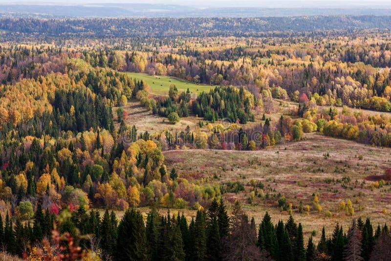 Vistas impressionantes da floresta do russo de conífero e de árvores de folhas mortas no período dourado de outono imagem de stock