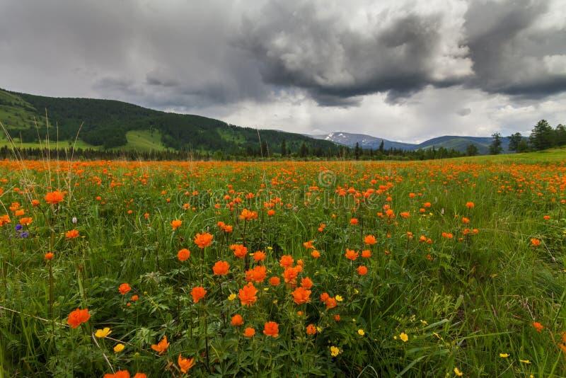 Vistas surpreendentes do prado florido fotografia de stock royalty free