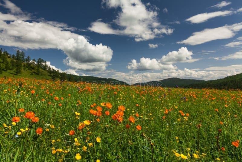 Vistas surpreendentes do prado florido imagens de stock royalty free