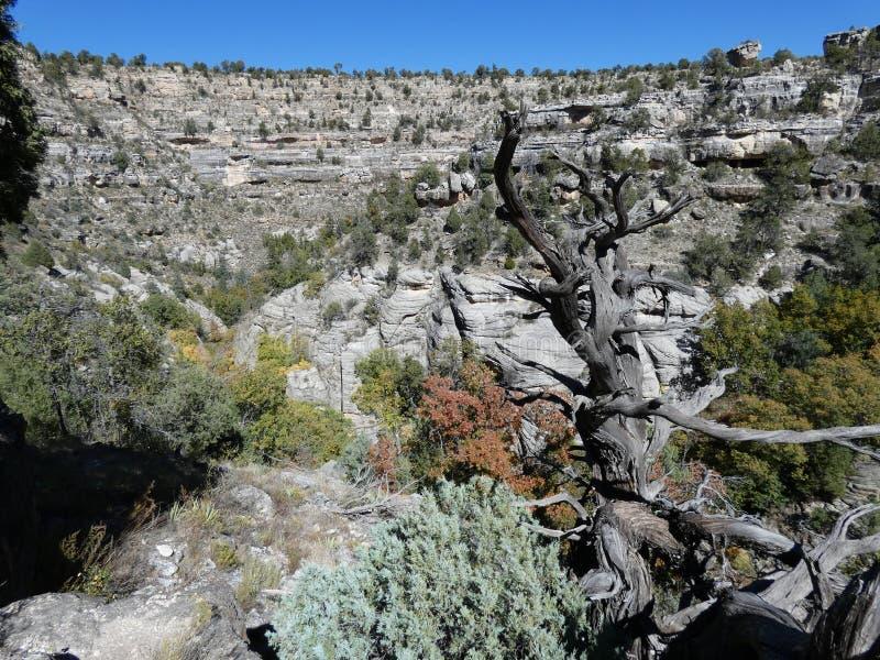 Viste del canyon della noce immagine stock libera da diritti