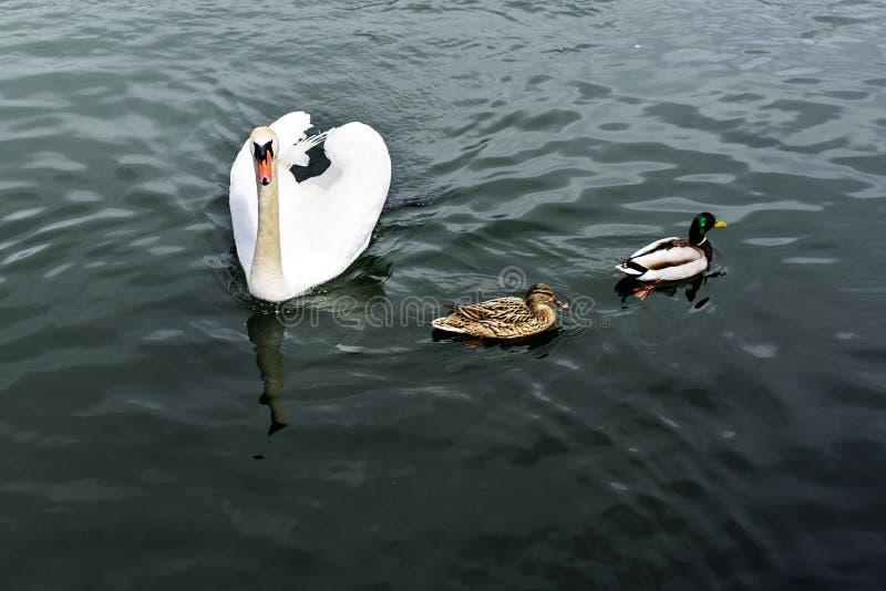 Viste del lago di leman a Ginevra, Svizzera fotografie stock libere da diritti