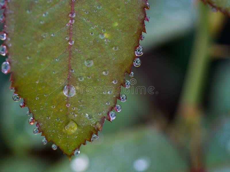Viste della foto nelle gocce di pioggia immagini stock