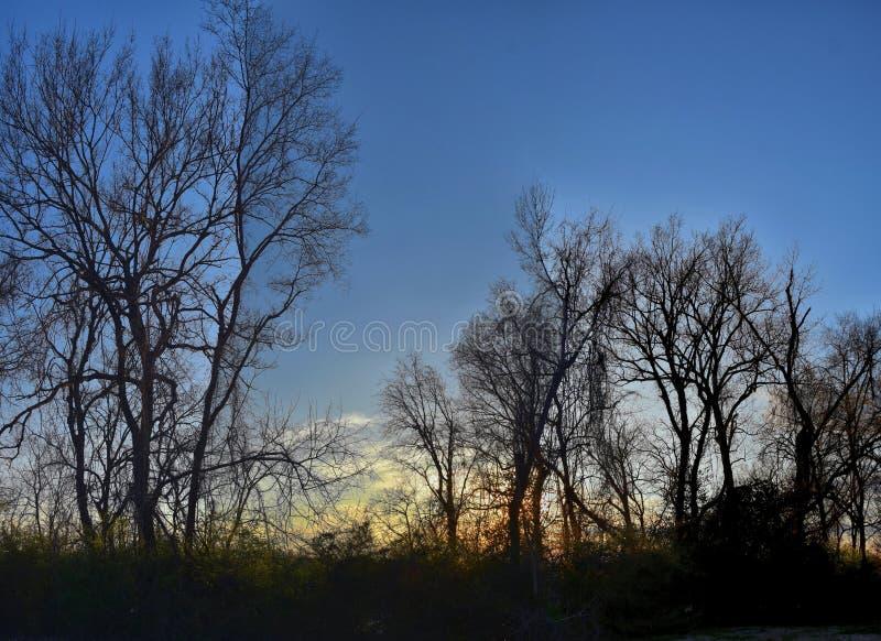 Viste di tramonto di crepuscolo attraverso i rami di albero di inverno da Opryland lungo Shelby Bottoms Greenway e l'area natural fotografia stock libera da diritti