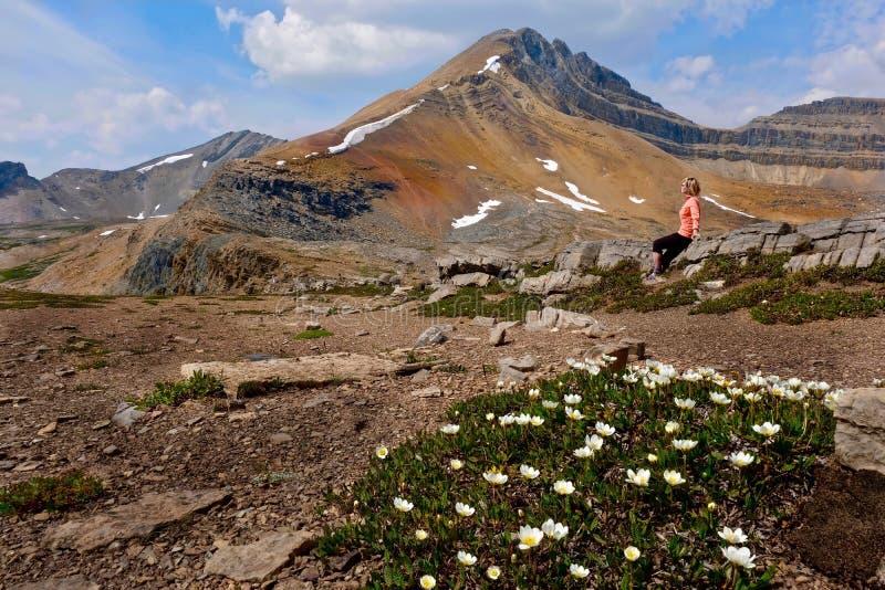 Viste sceniche del picco di montagna e dei fiori selvaggi in prati alpini fotografia stock libera da diritti