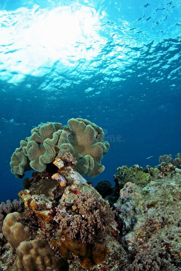 Viste sul mare subacquee stupefacenti immagine stock