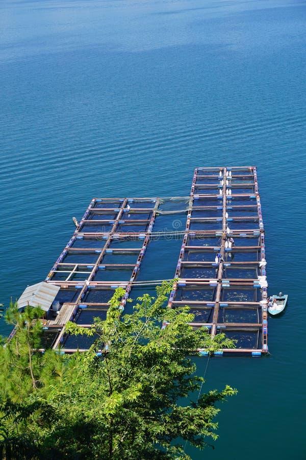 Visto dalla cima un gruppo di gabbie nette di galleggiamento sul lago Toba Questa gabbia è usata per la piscicoltura fotografia stock libera da diritti