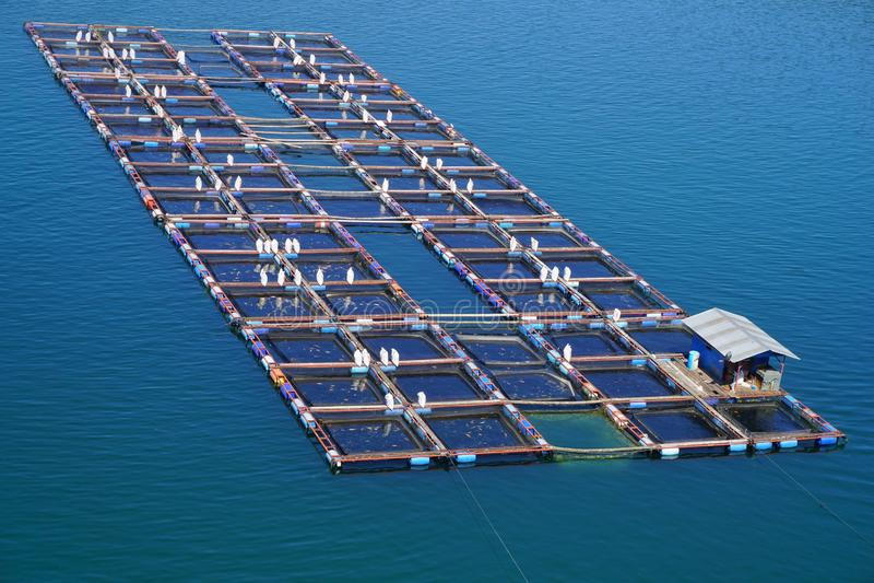 Visto dalla cima un gruppo di gabbie nette di galleggiamento sul lago Toba Questa gabbia è usata per la piscicoltura fotografie stock