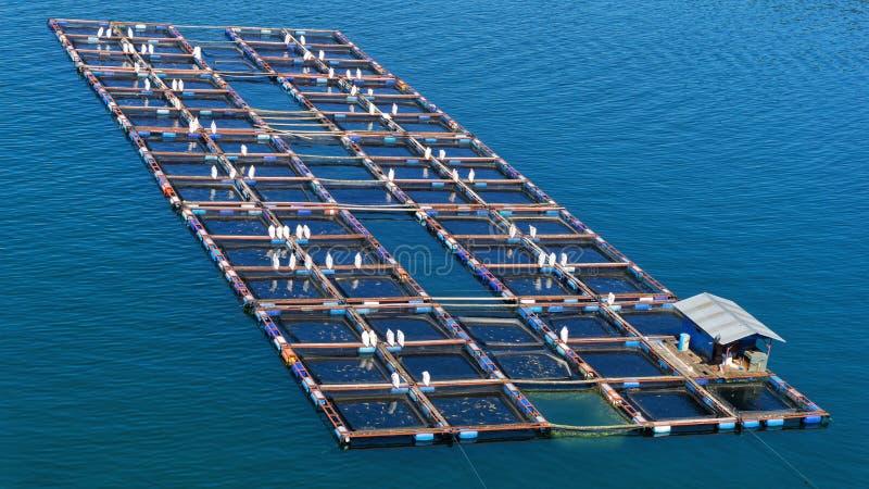 Visto dalla cima un gruppo di gabbie nette di galleggiamento sul lago Toba Questa gabbia è usata per la piscicoltura immagine stock libera da diritti