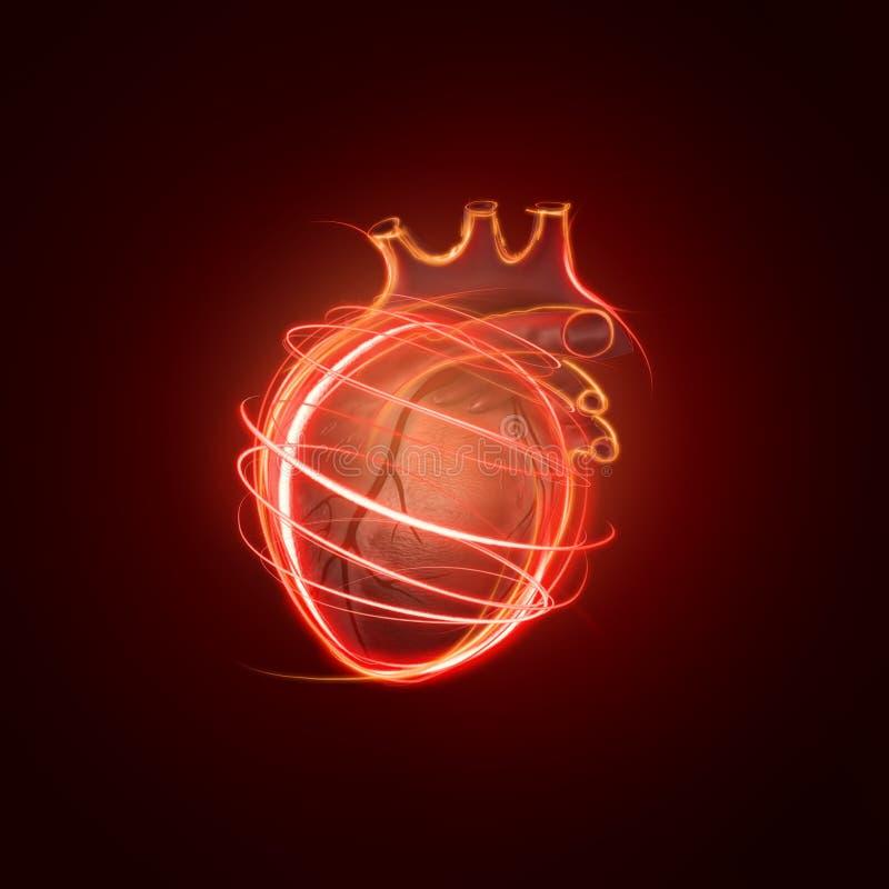 Visualisation du coeur humain fait de lignes au néon image libre de droits