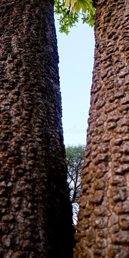 Visualizzazione ad albero fra la foto di riserva dei tronchi fotografie stock libere da diritti
