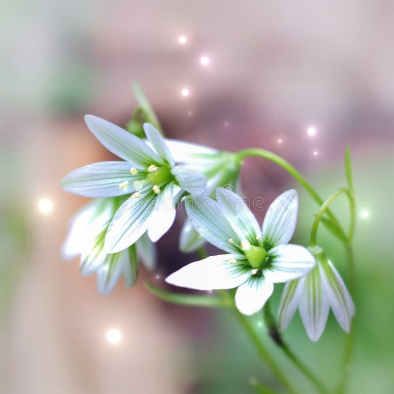 Vit blomma för klockaform på suddig drömlik bakgrund arkivfoton