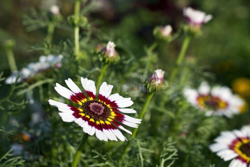 Vit blomma i grönt gräs royaltyfri fotografi
