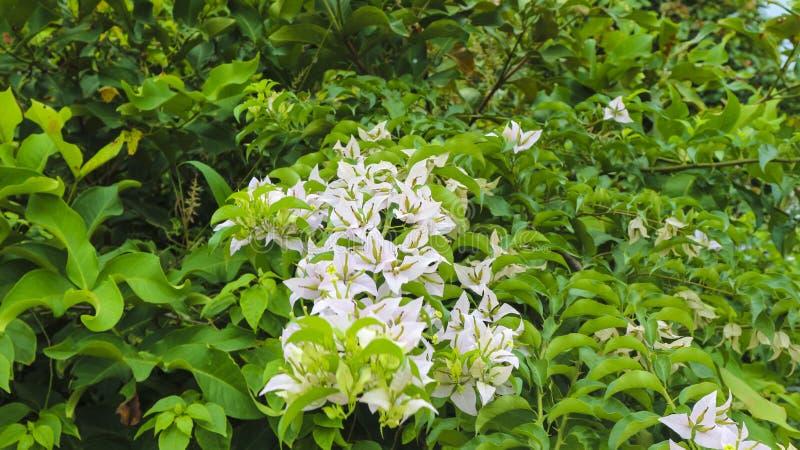 Vit blomma i parkera i trädgården arkivbild