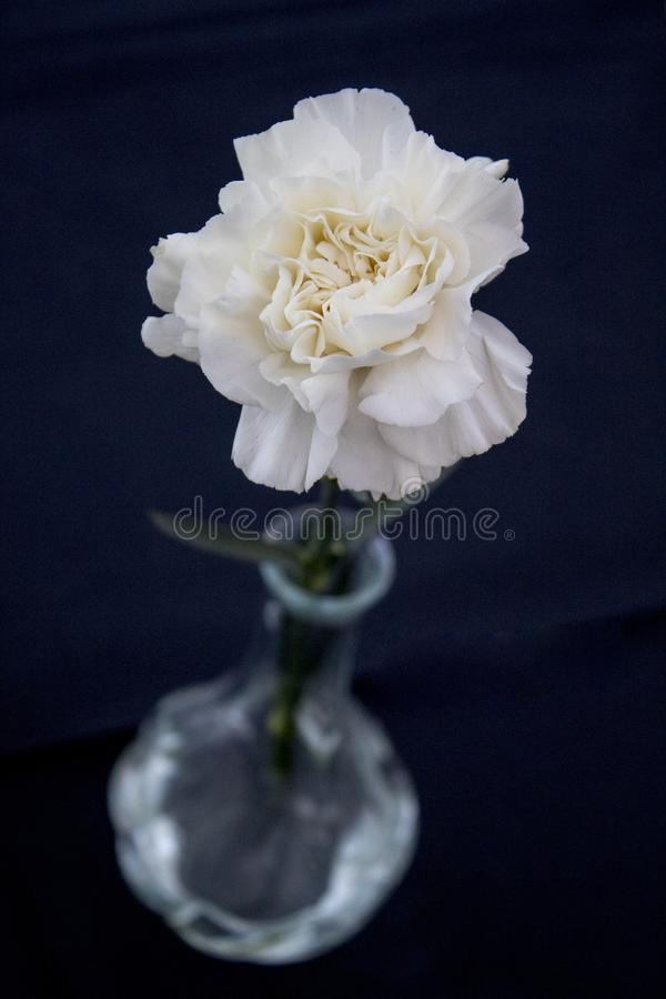 Vit blomma med den suddiga vasen royaltyfri bild