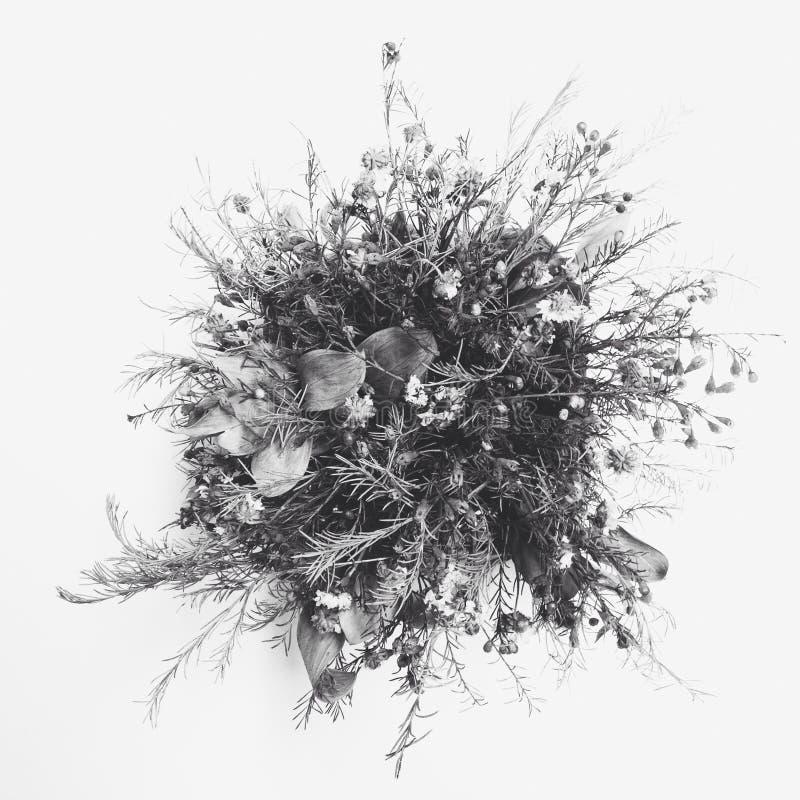 Vit blomma med mörk bakgrund royaltyfri bild