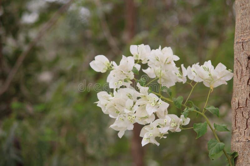 Vit blomma med suddig bakgrund royaltyfria bilder