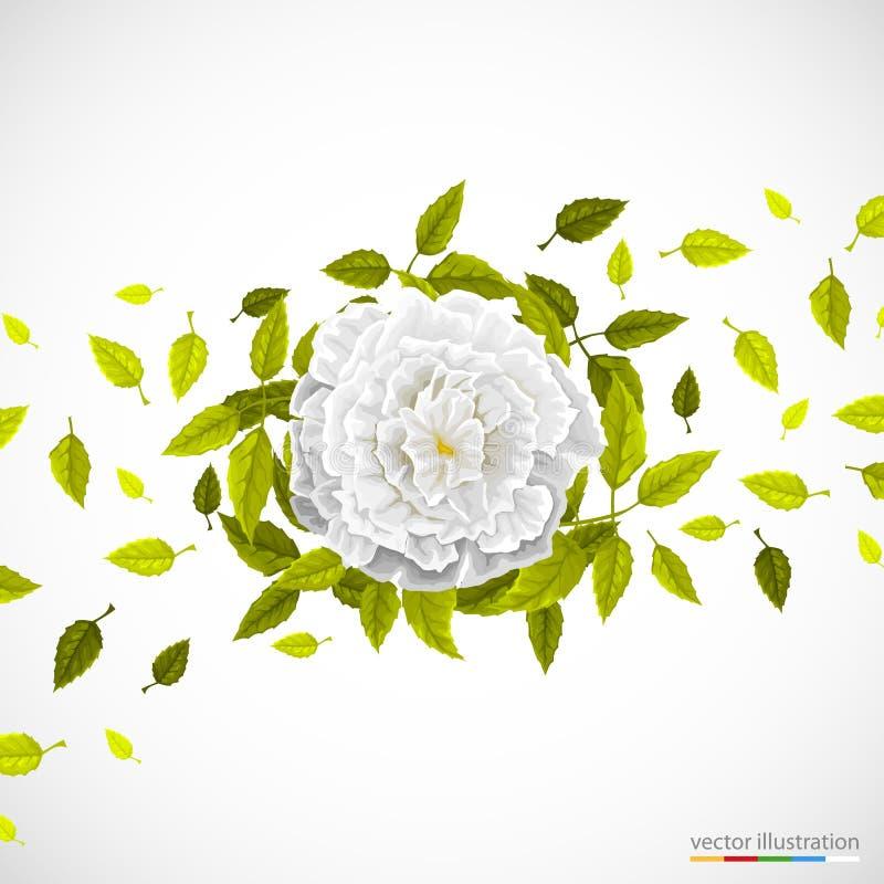Vit blomma och blad på ljus bakgrund vektor illustrationer
