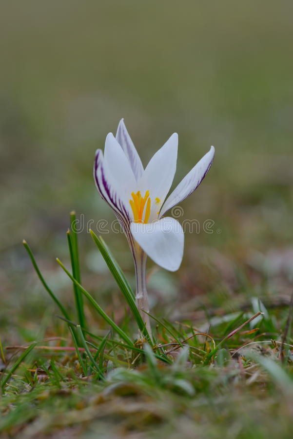 Vit blomma på fält arkivbilder