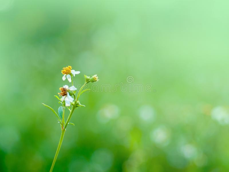 Vit blomma på naturlig grön bakgrund arkivbilder