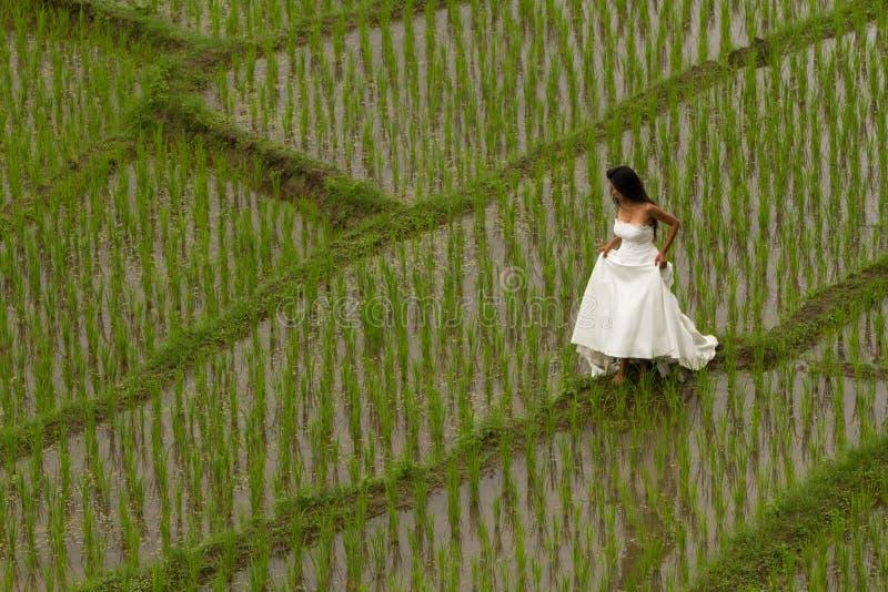 Vit brud- klänning med den härliga romantiska unga kvinnan i terrasserat risfältfält arkivbilder