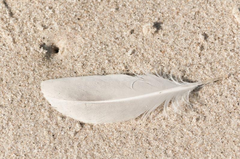 Vit enkel fjäder på en sandig tropisk strand arkivfoto