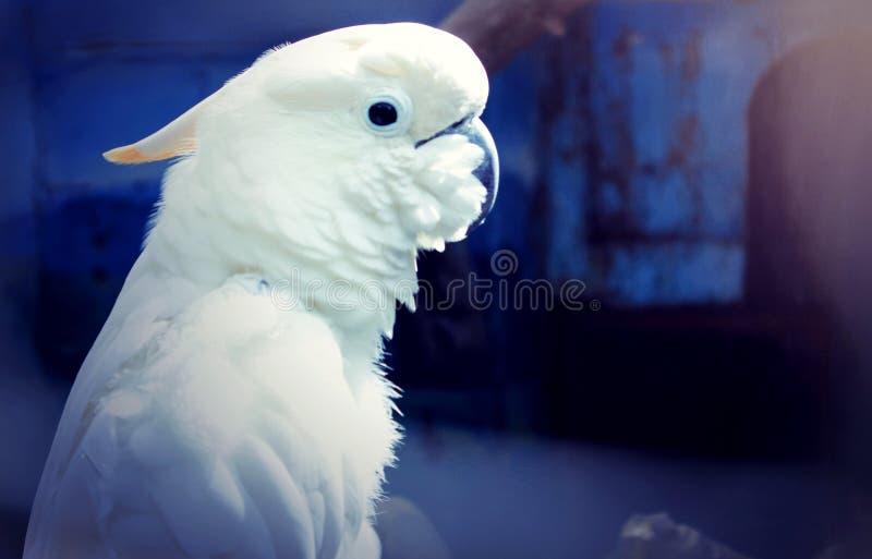 Vit fågel indonesia royaltyfri fotografi