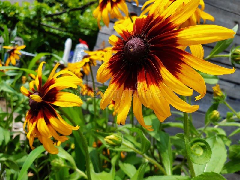 Vit för yelow för blommagräsplannatur härlig royaltyfri foto