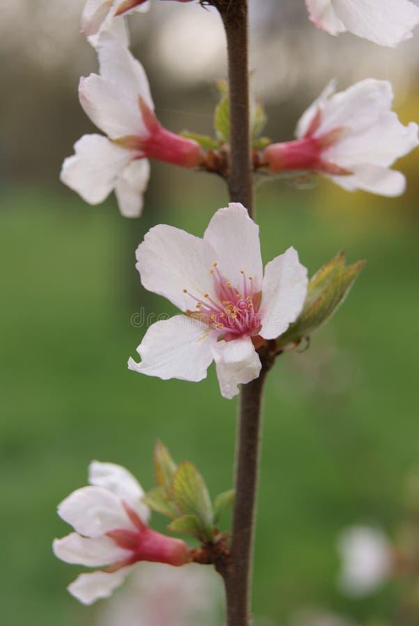 Vit fjädrar blomningen royaltyfri foto