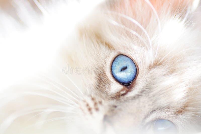 Vit fluffig katt för drömlik softabstrakt begreppbakgrund royaltyfria bilder