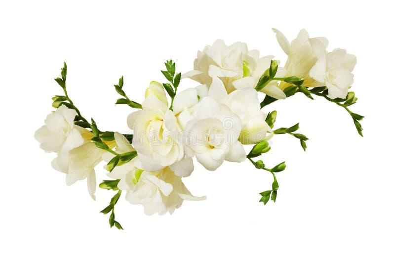 Vit freesia blommar i en härlig arrangment arkivfoton