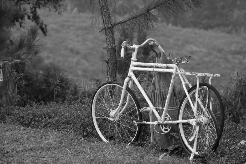 Vit gammal cykel royaltyfri bild